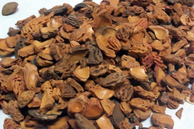 şeftali çekirdeği kabuğu satışı fiyatı satıcıları ŞEFTALİ peach kernel perziksteen shell Turkey