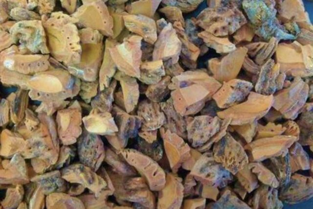 şeftali çekirdeği kabuğu satışı fiyatı satıcıları 0005peach kernel perziksteen shell Turkey