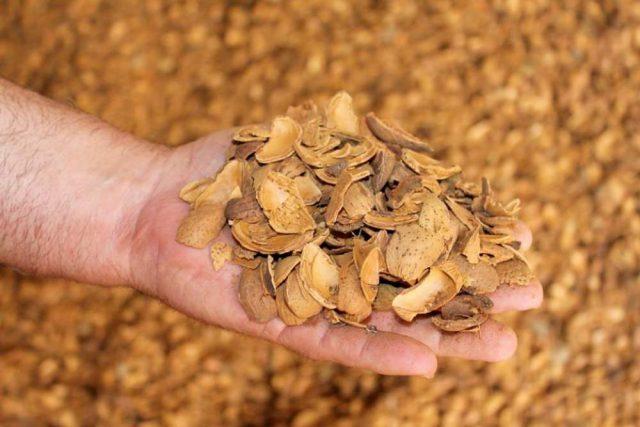 Badem kabuğu satışı fiyatı satıcıları 0005 Almond shell Turkey