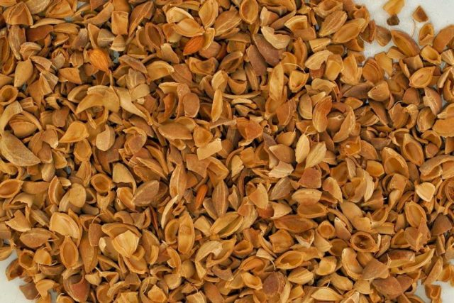 kayısı çekirdeği kabuğu satışı fiyatı satıcıları - Apricot kernel shell turkey (1)