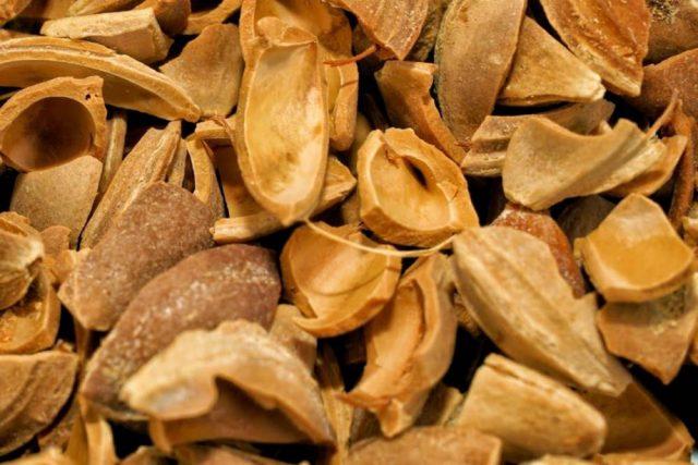 kayısı çekirdeği kabuğu satışı fiyatı satıcıları - Apricot kernel shell turkey (3)