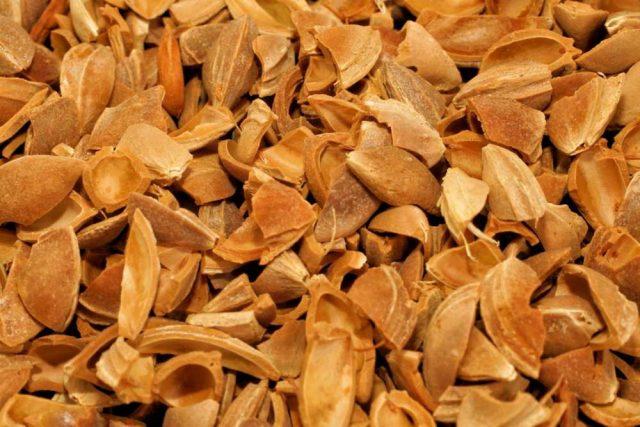 kayısı çekirdeği kabuğu satışı fiyatı satıcıları - Apricot kernel shell turkey (4)