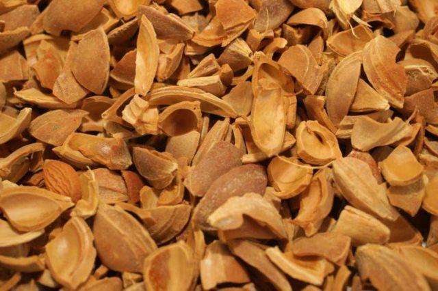 kayısı çekirdeği kabuğu satışı fiyatı satıcıları - Apricot kernel shell turkey (5)
